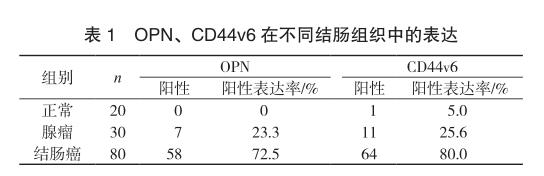 OPN、CD44v6 在不同结肠组织中的表达